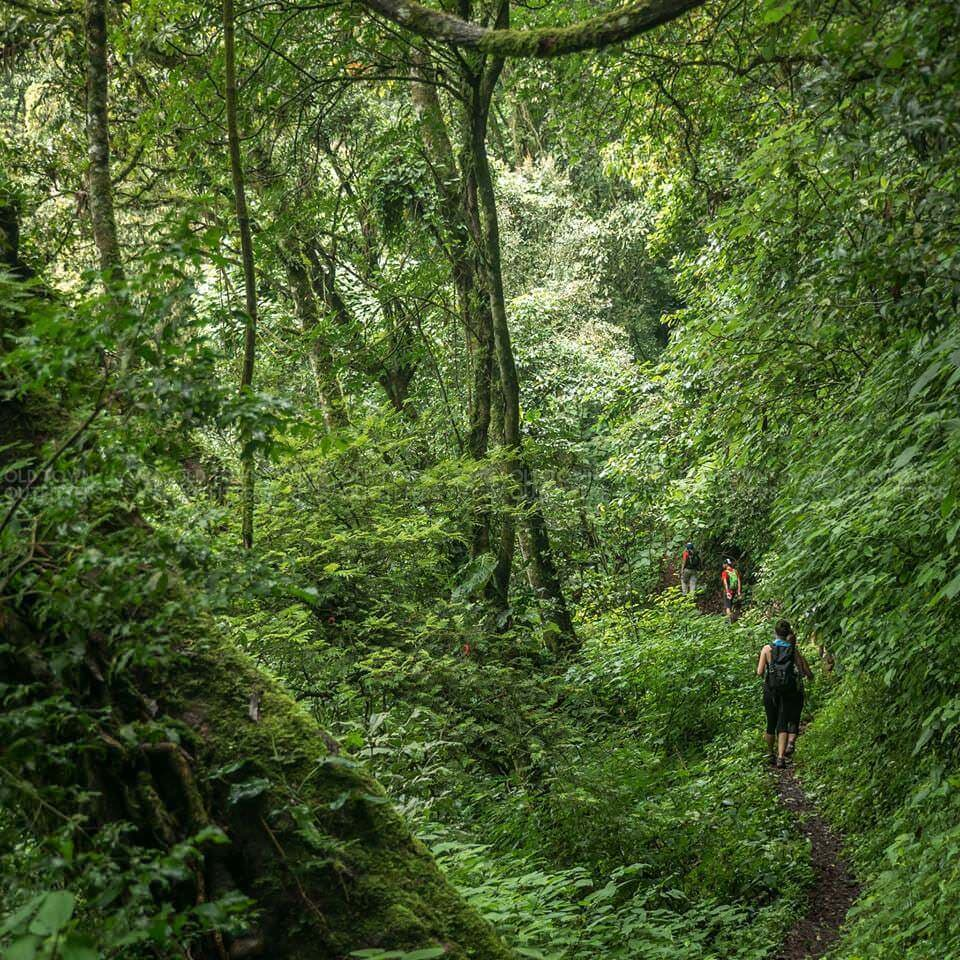 Antigua Day Hike Forest