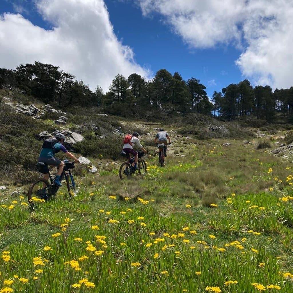 Highlands hut to hut wild flowers