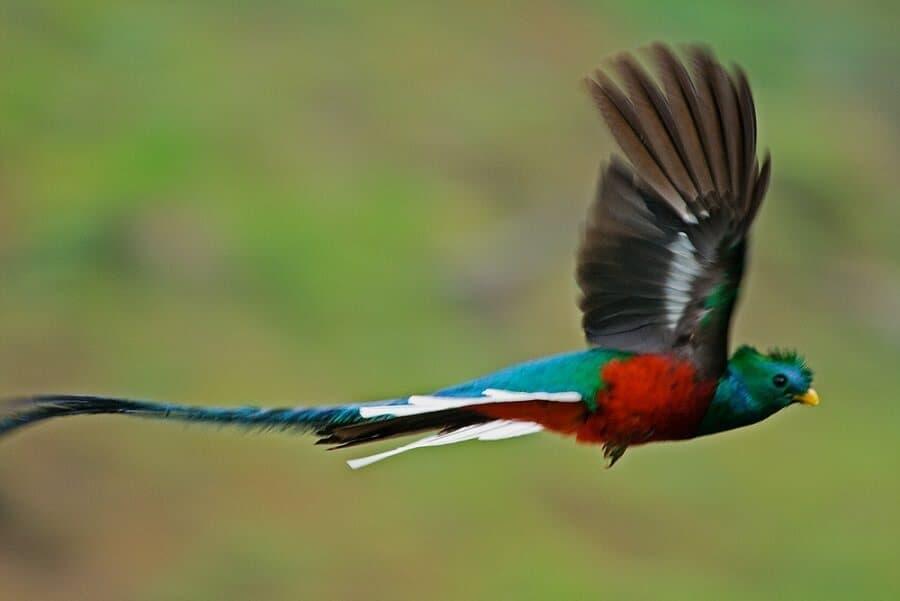 Quetzal National Bird