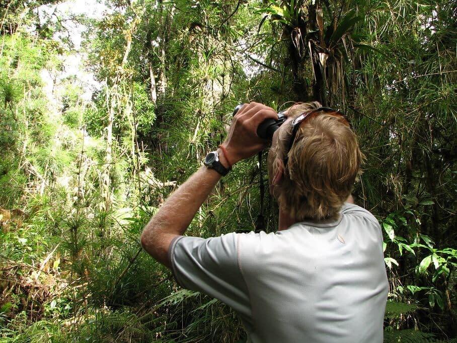 Sierra Las Minas Birdwatcher