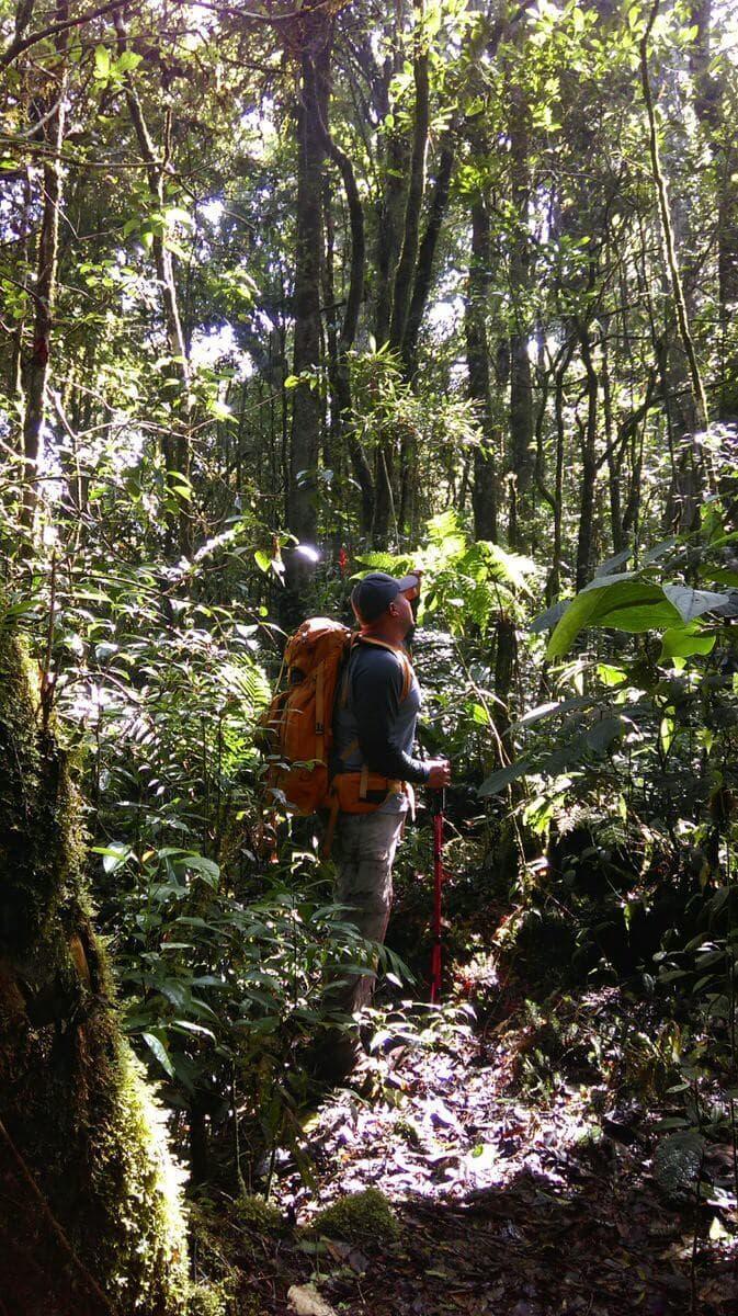 Sierra Las Minas Hiker