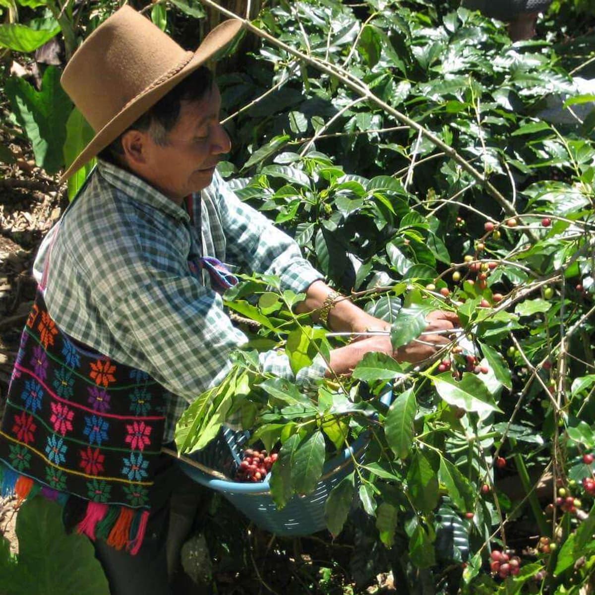 Sip n Cycle Coffee Farmer